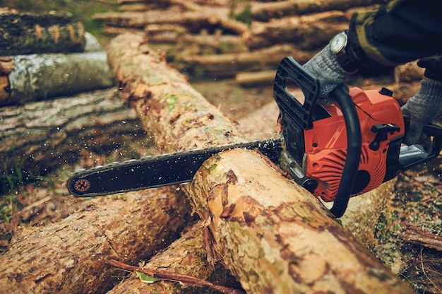 Chainsaw. close-up of woodcutter sawing chain saw in motion, sawdust fly to sides. concept bring down trees.
