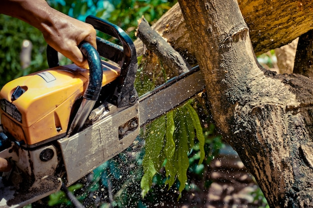 Chainsaw. close-up of woodcutter sawing chain saw in motion