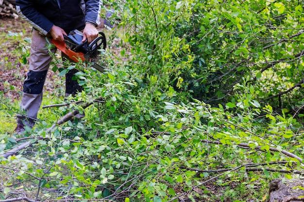전기 톱은 톱밥 나무로 자르고 격렬한 폭풍우 동안 바람에 찢겨 뿌리 뽑힌 부러진 나무를 깎습니다.