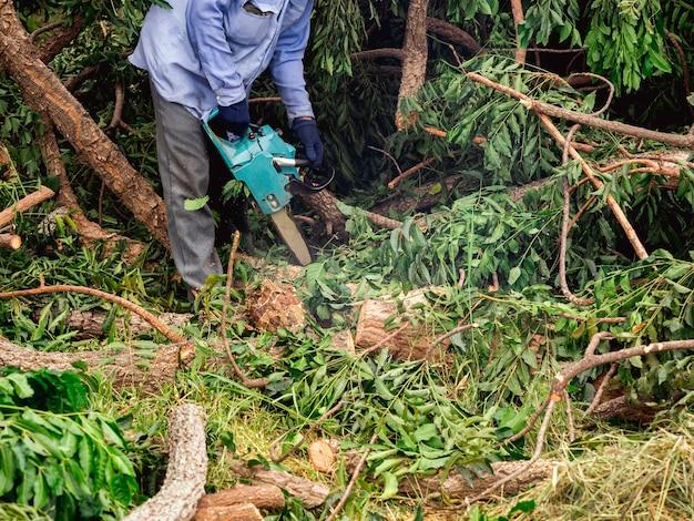 Бензопила в движении по дереву. лесоруб держит старую бензопилу и распиливает бревно, большое дерево в лесу, опилки летают в зеленом лесу.