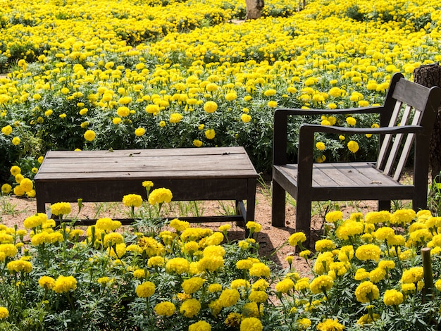 The chair and table among the marigolds field in the park