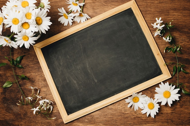 Chalkboard near fresh daisy flowers