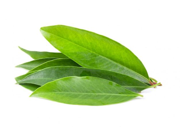 Листья чамауна на белом