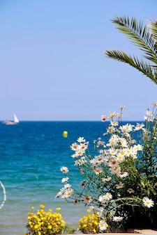 カモミールと海の小さな黄色い花