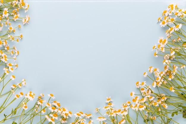카모마일 아로마 테라피 테마, 수제 화장품. textessential 및 의료 꽃 허브를위한 공간