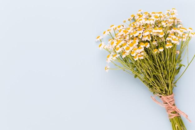 Тема ромашковой ароматерапии, косметика ручной работы. место для текстур, эфирных и лечебных цветов, трав