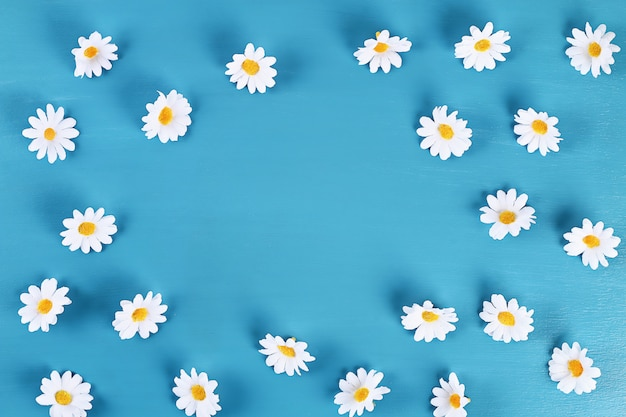 Chamomile on a blue background. top view. summer background