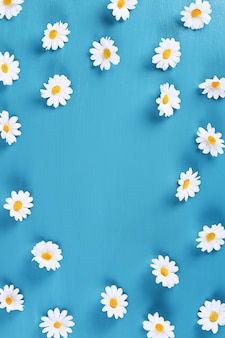 Chamomile on blue. top view. summer