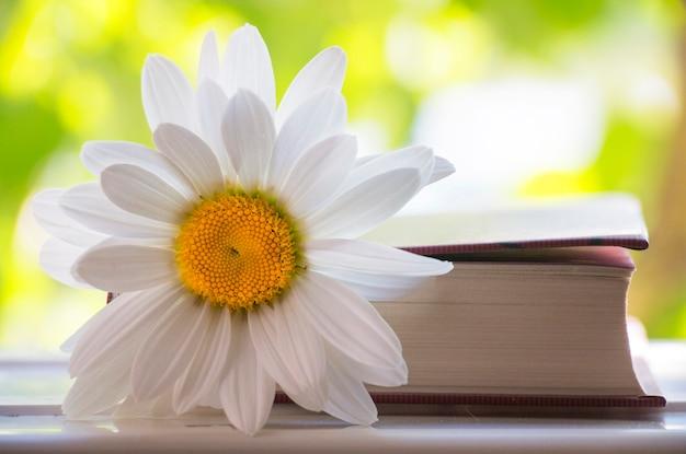 자연 속에서 카모마일 책 읽기