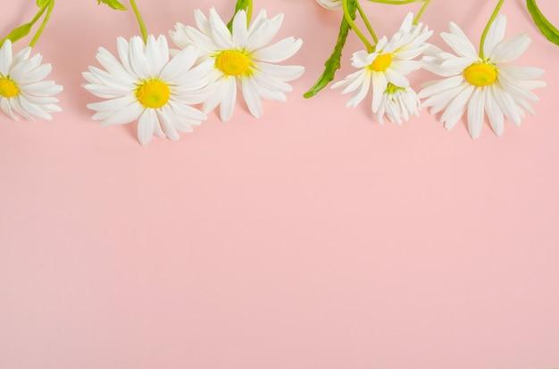 Открытка с ромашками на розовом