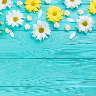 Chamomile and chrysanthemum flowers on turquoise wooden plank