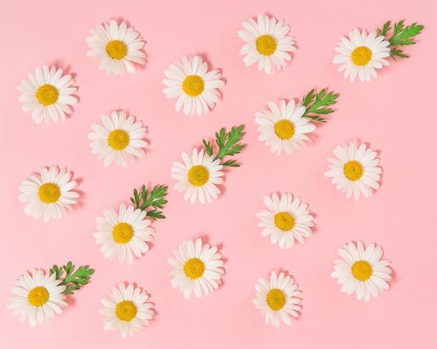 분홍색 종이 배경에 녹색 잎이 있는 카모마일 데이지 꽃. 플로럴 플랫 레이