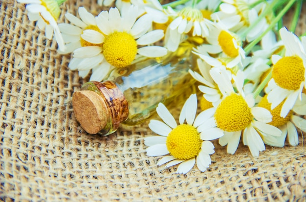 Chamomile extract. medicinal plants.