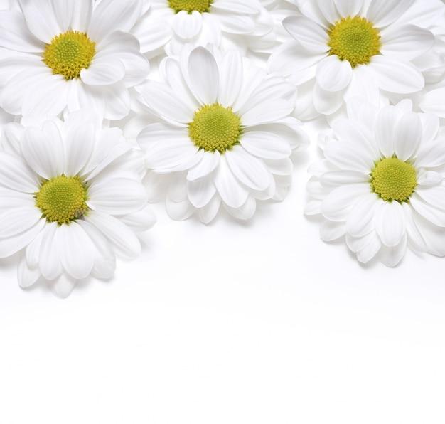 Chamomile flower frame