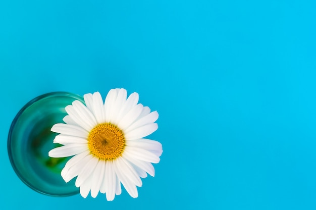 Chamomile flower in a glass view from above on a blue background in the lower left corner.
