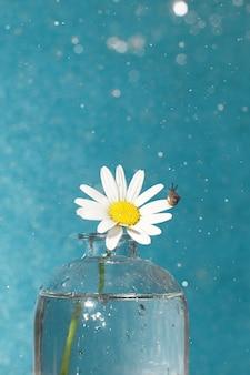 花瓶のカモミールの花と青い背景の雨滴を見ている小さなカタツムリ