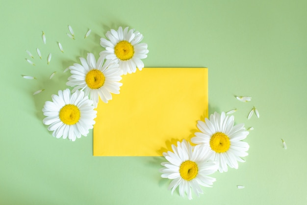 Chamomile flowers in envelope on colorful background