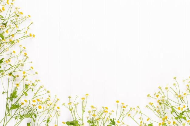 カモミールの花の花のフレーム。フラットレイ、上面図。
