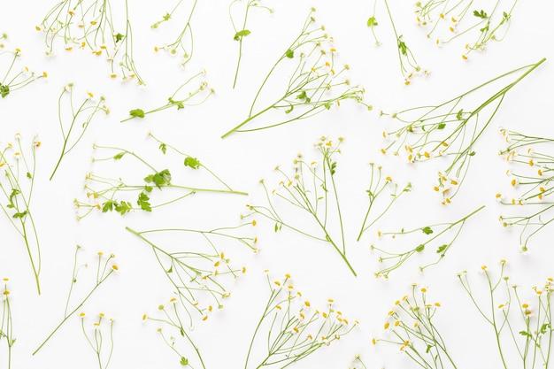 カモミールの花の花のframee。フラット横たわっていた、トップビュー。