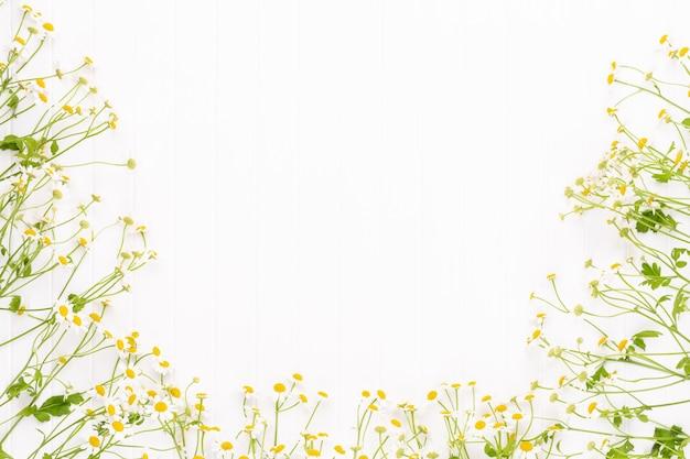 Цветочная рамка из цветов ромашки