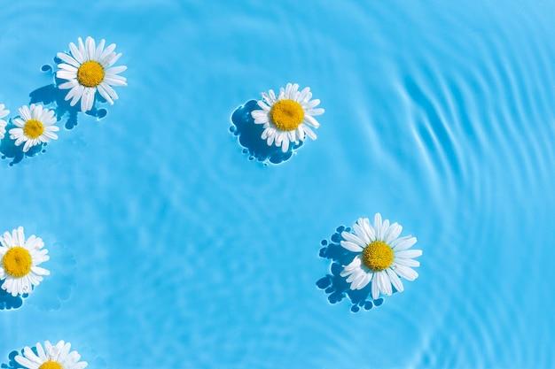 Цветки ромашки на фоне голубой воды. вид сверху, плоская планировка.