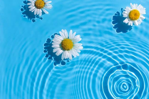 一滴から同心円と青い水の背景にカモミールの花。上面図、フラットレイ
