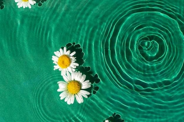 Цветки ромашки на водном зеленом фоне под солнечным светом. вид сверху, плоская планировка.