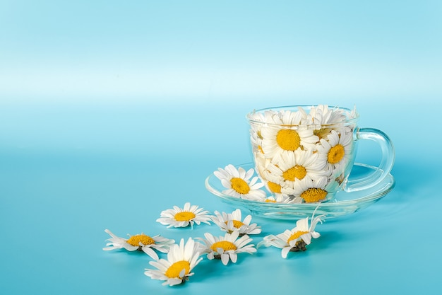 Chamomile flowers in transparent glass cup on saucer.