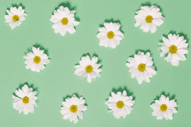 Chamomile heads on green background