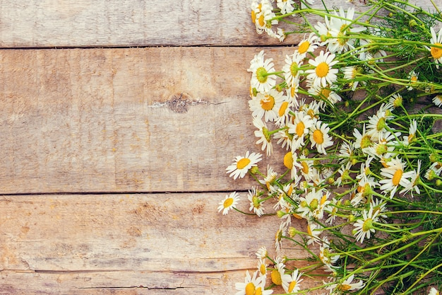 Chamomile, a tag. medicinal herbs. selective focus.
