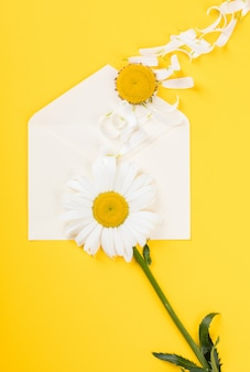Chamomile on yellow paper background.