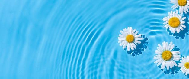 自然光の下で青い水の背景にあるカモミール。上面図、フラットレイ。バナー。