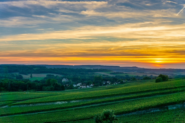 Champagne vineyards at sunset, montagne de reims, france.