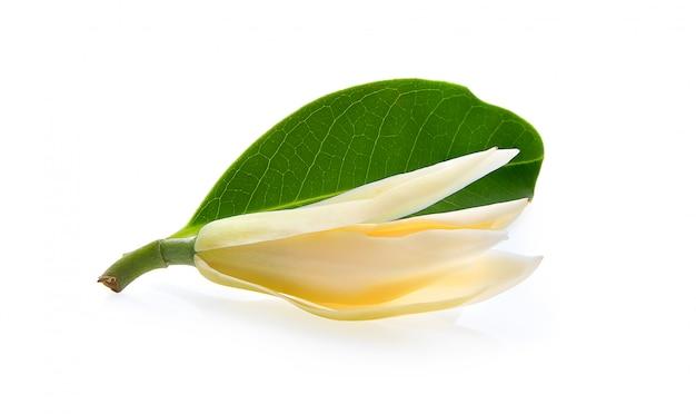 白い表面上に分離されて白いchampaka