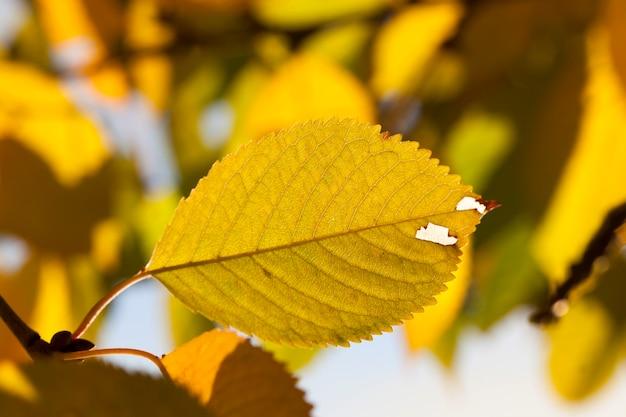 Смена цвета листьев деревьев ранней осенью еще теплая погода