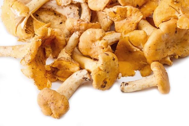 흰 배경에 고립 된 살구 버섯