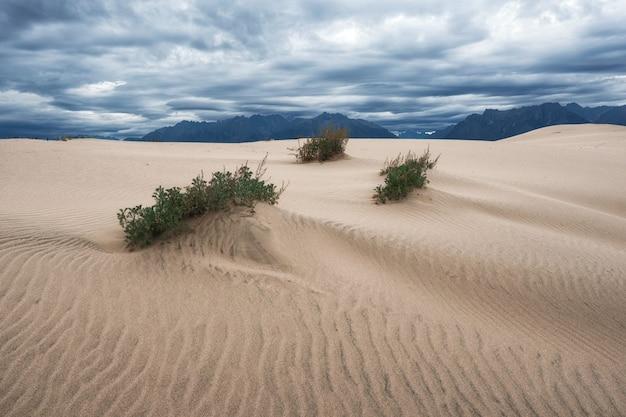 ロシア連邦、コダルとウドカン山脈の間のキャラ砂漠