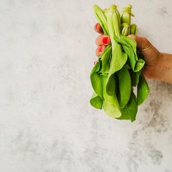 Chardの野菜を持っている女性の手のクローズアップ