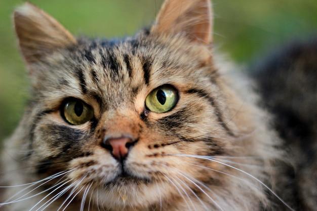 Charismatic adult cat poses