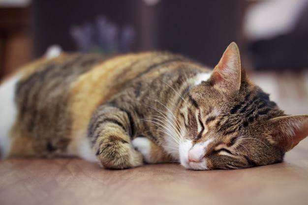 Charismatic adult cat sleeping poses