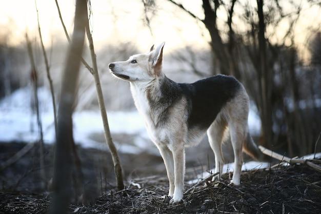 Харизматичная собака на прогулке зимой на рассвете