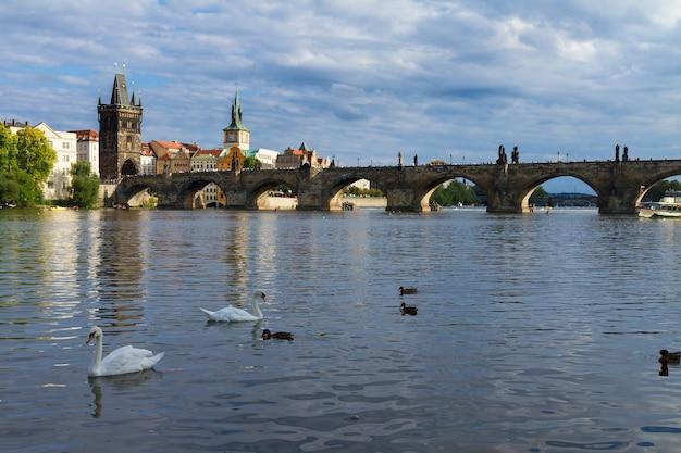 Карлов мост через реку влтава с лебедями, прага, чехия
