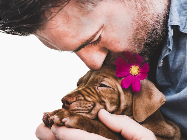 Charming, adorable puppy of brown color. close-up, indoor. day light. concept of care, education, obedience training, raising pets