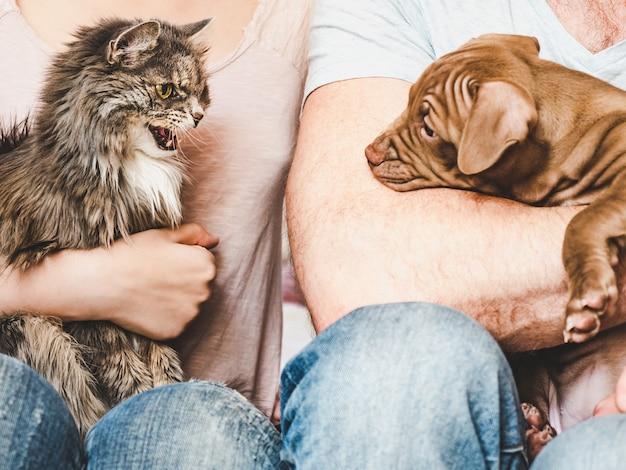 갈색의 매력적이고 사랑스러운 강아지. 클로즈업, 실내. 일광. 보살핌, 교육, 복종 훈련, 애완 동물 기르기의 개념