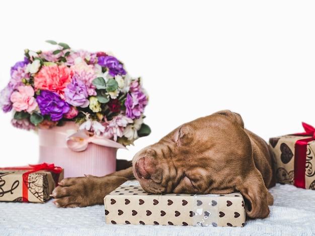 갈색의 매력적이고 사랑스러운 강아지. 클로즈업, 실내. 일광. 돌봄, 교육, 복종 훈련, 애완 동물 기르기의 개념