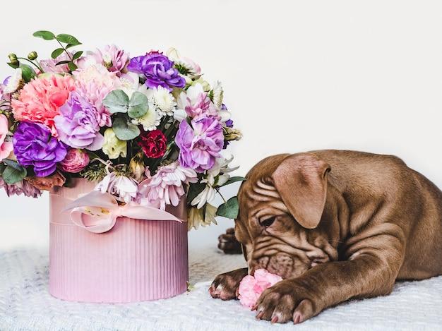 갈색의 매력적이고 사랑스러운 강아지. 클로즈업, 실내. 데이 라이트