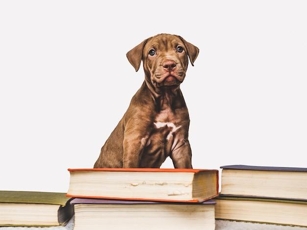 갈색의 매력적이고 사랑스러운 강아지. 클로즈업, 실내. 스튜디오 사진. 돌봄, 교육, 복종 훈련, 애완 동물 기르기의 개념