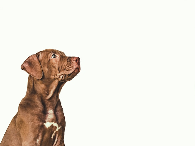 갈색의 매력적이고 사랑스러운 강아지.