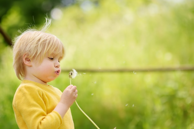 Charming blonde little boy playing with dandelion flower on summer day.