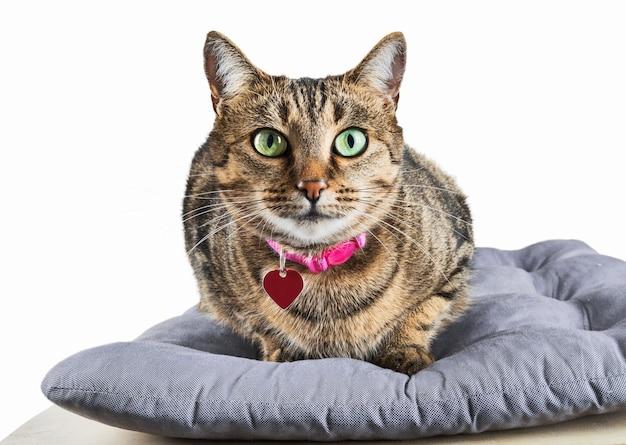 魅力的な国産のベンガル猫が柔らかい枕の上に横たわり、カメラをのぞき込みます。